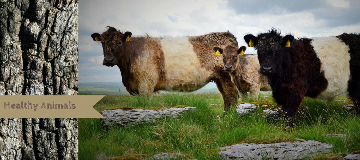 Primal Meats - Healthy Animals